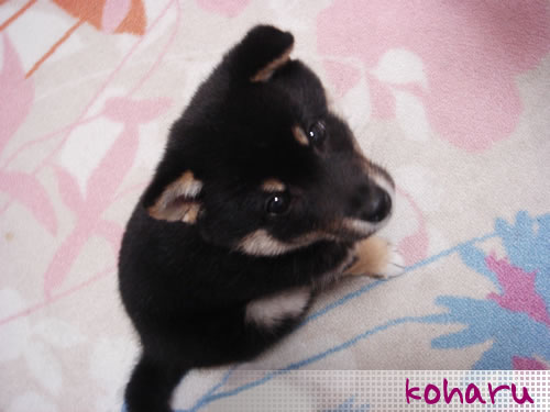 koharu - this picture is when she was 3 months old!
