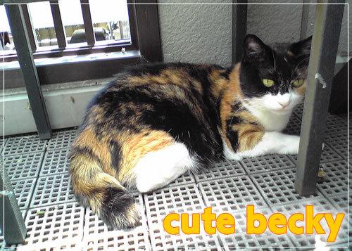 My_cute_cat_becky