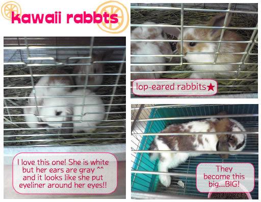 Lop_eared_rabbits