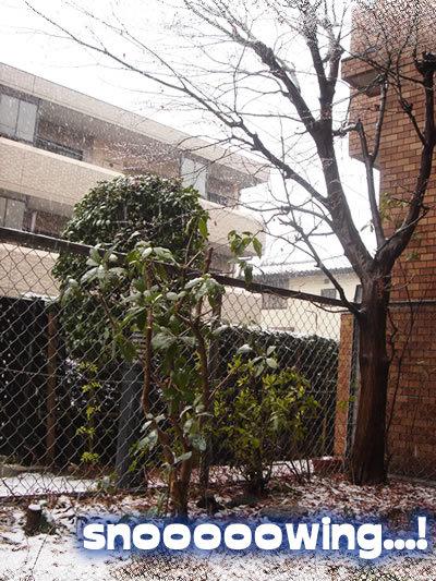 Snowing20081