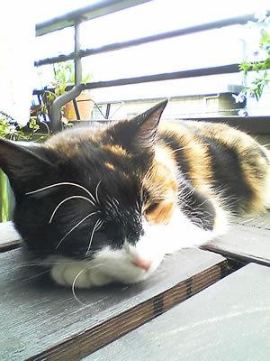 Sleeping Becky