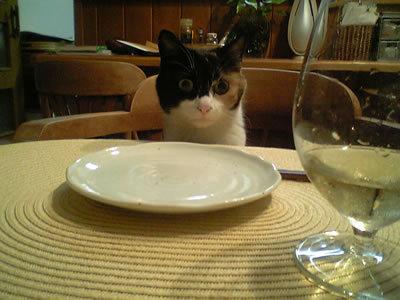 want sashimi!!